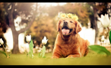 Easter Golden Retriever Wallpapers