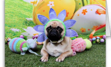 Easter Pug Wallpaper