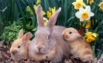 Easter Wallpaper with Cute Animals