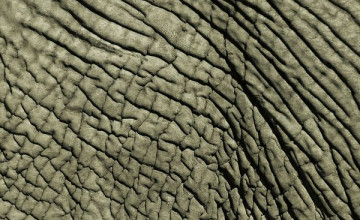 Elephant Skin Wallpaper