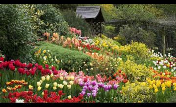 English Garden Desktop Wallpaper