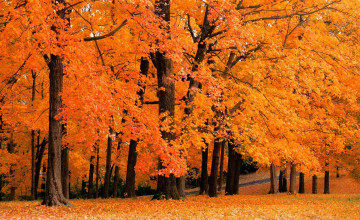 Fall Foliage Wallpapers