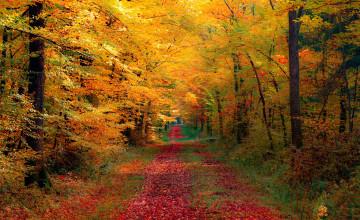 Fall Forest Wallpaper