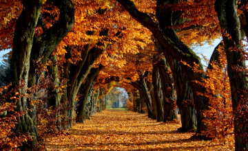 Fall HD Widescreen Wallpaper