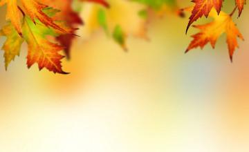 Fall Leaves Wallpaper Border