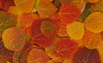 Fall Leaves Wallpaper for Desktop