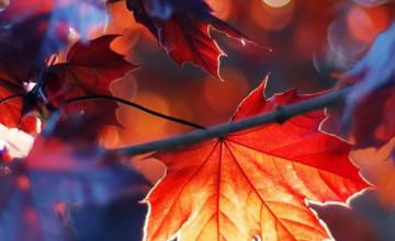 Fall Leaves Wallpaper iPhone
