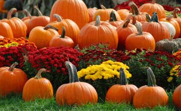 Fall Scene Wallpaper with Pumpkins