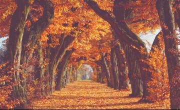 Fall Tumblr Wallpaper