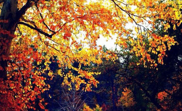 Fall Wallpaper for iPhone 5
