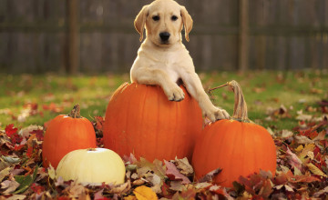 Fall Wallpaper with Dogs