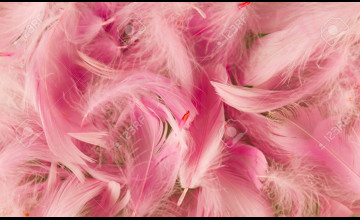 Feather Pink Wallpaper