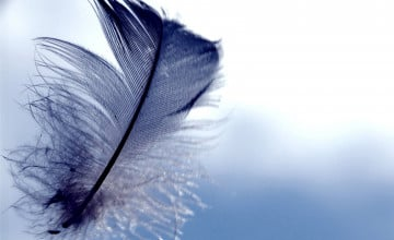 Feather Wallpapers