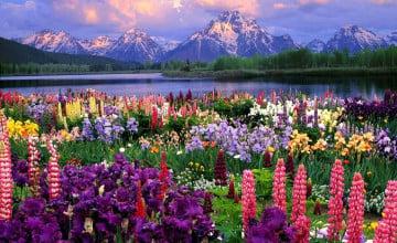 Field of Flowers Wallpapers