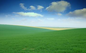 Field Wallpaper