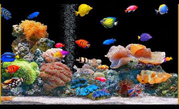 Fish Moving Wallpaper
