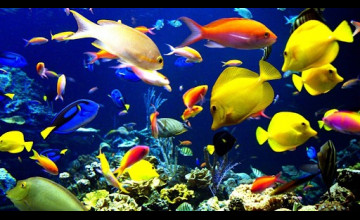 Fish Swimming Live Wallpaper