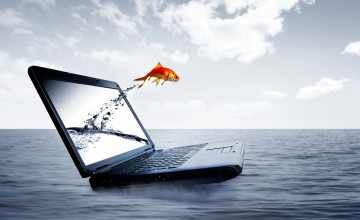 Fish Wallpaper for Laptop