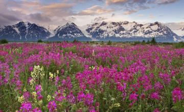 Floral Wallpaper Canada