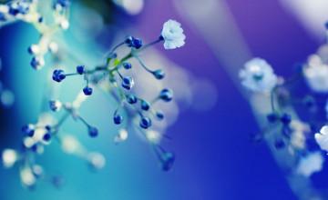 Flower Close Up Wallpaper