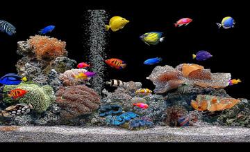 Free 3D Fish Tank Wallpaper
