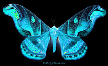 Free Butterfly Wallpaper and Screensavers