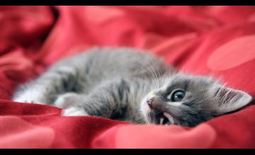 Free Cat Wallpaper and Screensavers