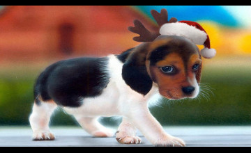 Free Christmas Wallpaper with Dogs