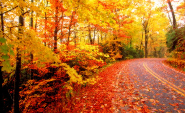 Free Desktop Wallpaper Autumn Leaves