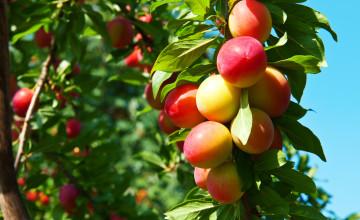 Free Desktop Wallpaper Spring Fruits