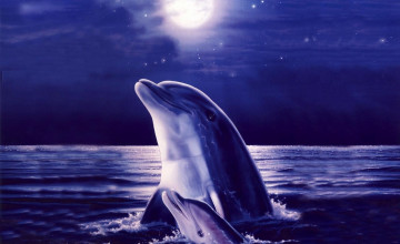 Free Dolphin Wallpaper Downloads