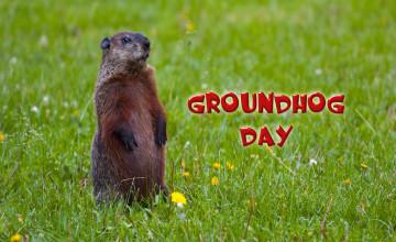 Free Groundhog Day Wallpaper