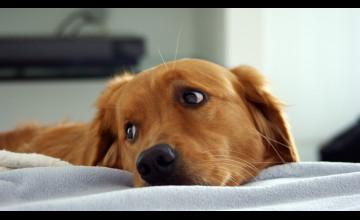 Free HD Wallpaper Dogs