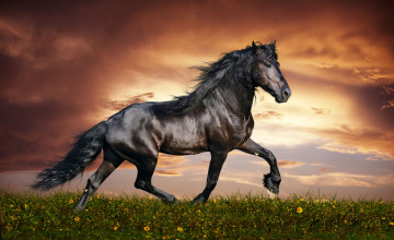 Free Horse Wallpaper Downloads
