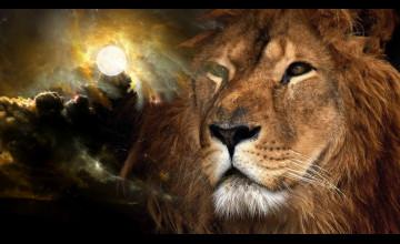 Free Lion Wallpaper