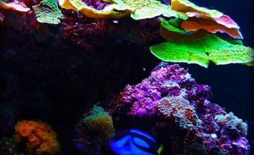 Free Live Aquarium Wallpaper Downloads