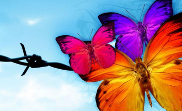 Free Pictures of Butterflies Wallpaper