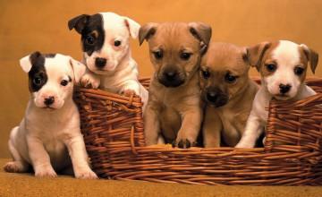 Free Puppies Wallpaper