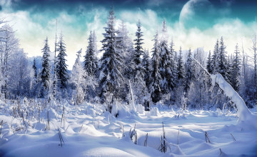 Free Snow Wallpapers For Desktop