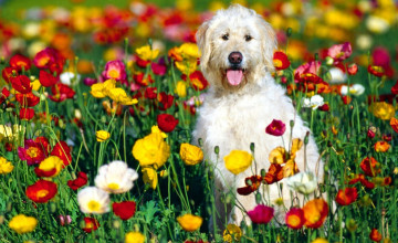 Free Spring Wallpaper with Dogs