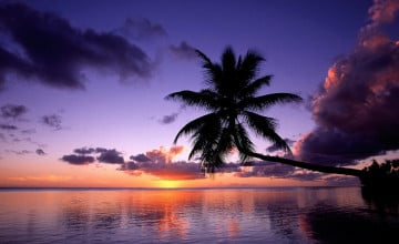 Free Sunset Tropical Island Wallpaper