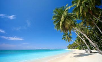 Free Tropical Screensavers and Wallpaper