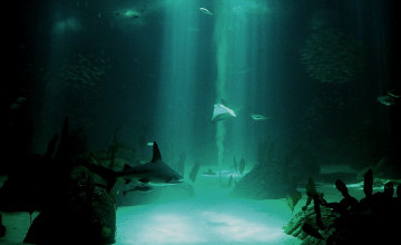 Free Underwater Wallpaper