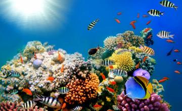 Free Underwater Wallpapers for Desktop
