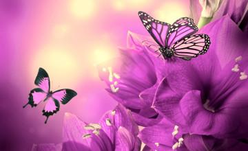 Free Wallpaper Butterflies and Flowers