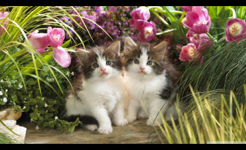 Free Wallpaper Cats and Kittens