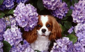 Free Wallpaper Spring Dogs