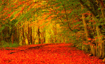 Free Widescreen HD Wallpapers Fall