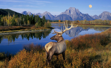 Free Wildlife Animal Desktop Wallpapers