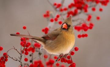 Free Winter Birds Desktop Wallpaper